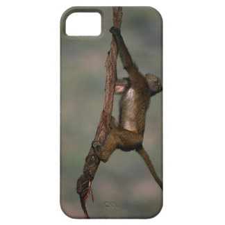 Olive baboon (Papio anubis) climbing on branch, iPhone SE/5/5s Case