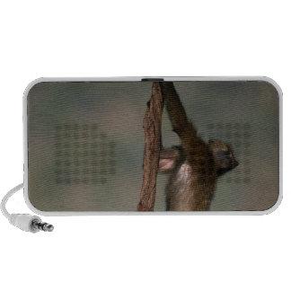 Olive baboon (Papio anubis) climbing on branch, Mini Speakers