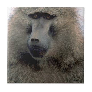 OLIVE BABOON SMALL SQUARE TILE