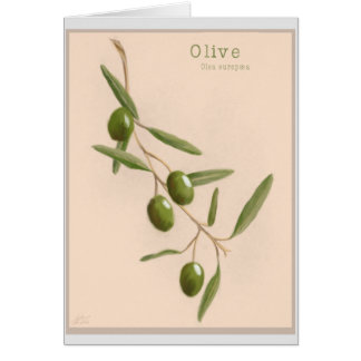 Olive Branch Card