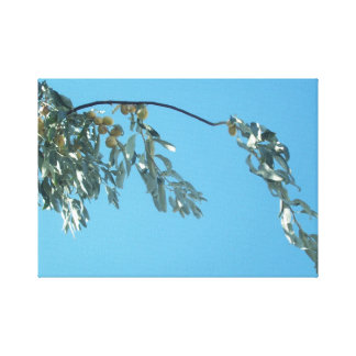 Olive Branch on Sky Streched Canvas