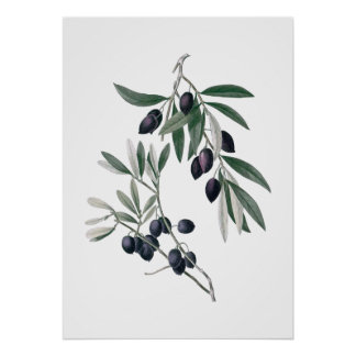 Olive branches poster