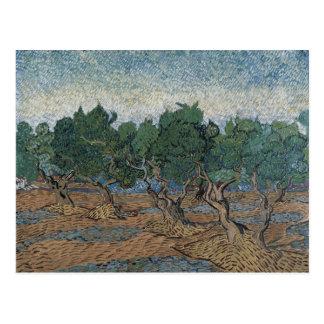 Olive Grove by Vincent Van Gogh Postcard