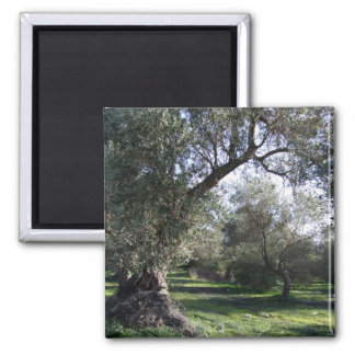 Olive Grove Greek Magnet