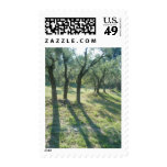 Olive Grove, St. Remy, France Postage
