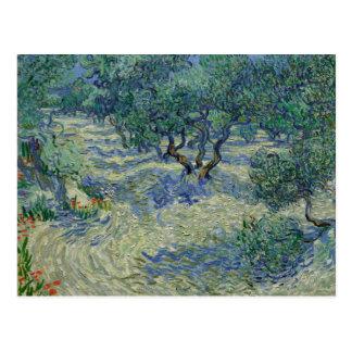 Olive Orchard by Vincent Van Gogh Postcard