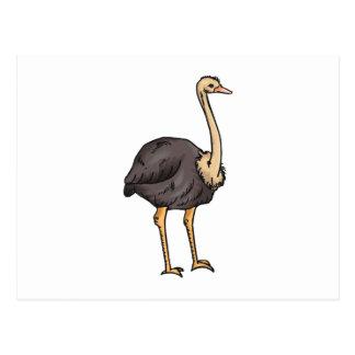 Olive Ostrich Postcard