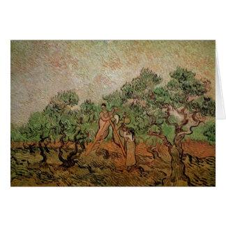 Olive Picking by Vincent van Gogh Cards