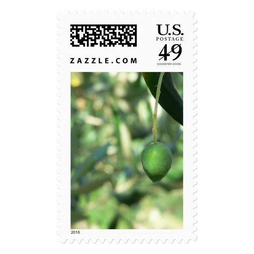 Olive Postage Stamp