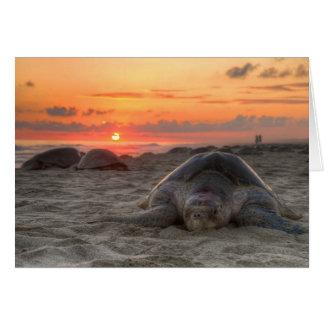 Olive Ridley Turtle nesting on Escobilla Oaxaca Card