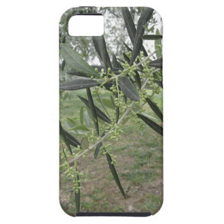 Olive tree branches with first buds . Tuscany, Ita iPhone SE/5/5s Case