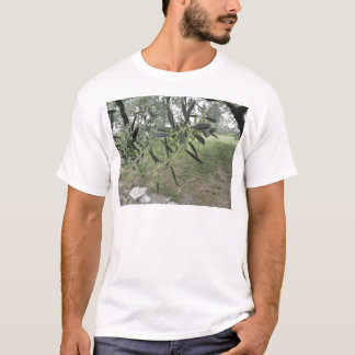 Olive tree branches with first buds . Tuscany, Ita T-Shirt