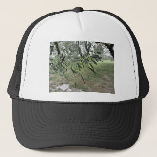 Olive tree branches with first buds . Tuscany, Ita Trucker Hat