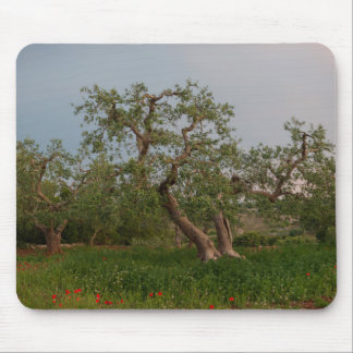 Olive tree grove at sunset mousepad