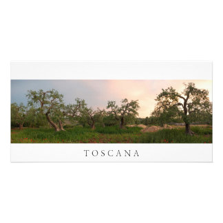 Olive tree grove at sunset photo card