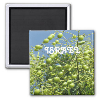 Olive Tree in Israel 2 Inch Square Magnet