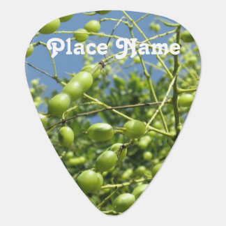 Olive Tree in Israel Guitar Pick