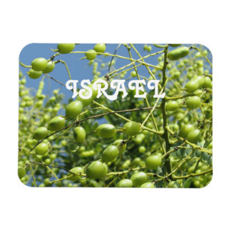 Olive Tree in Israel Magnet