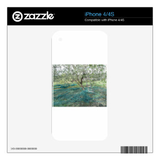Olive tree in the garden iPhone 4 skin