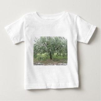 Olive tree in the garden . Tuscany, Italy Baby T-Shirt