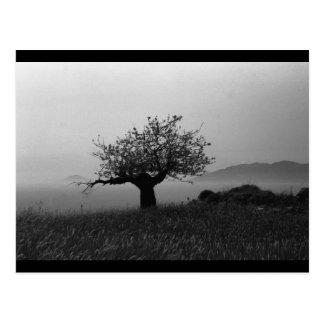 Olive Tree (postcard)