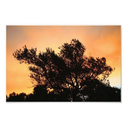 Olive Tree Silhouette At Sunset Photo Print