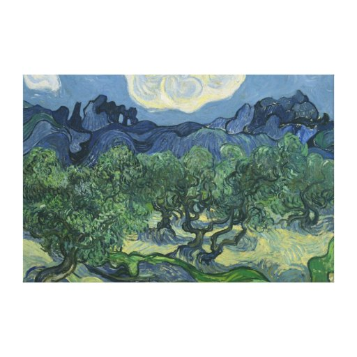 Olive Trees Canvas Canvas Print