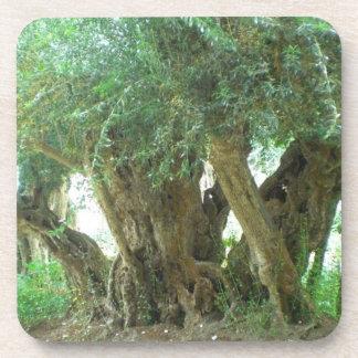 Olive trees coaster