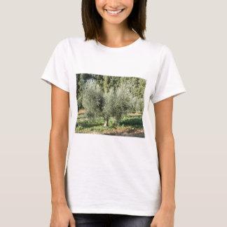 Olive trees in a sunny day. Tuscany, Italy T-Shirt