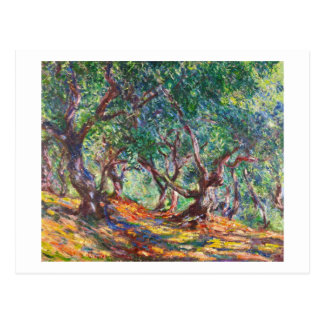 Olive Trees in Bordighera, 1884 Claude Monet Postcard