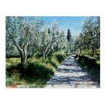 OLIVE TREES IN RIMAGGIO POSTCARD
