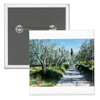 OLIVE TREES IN TUSCANY PINS