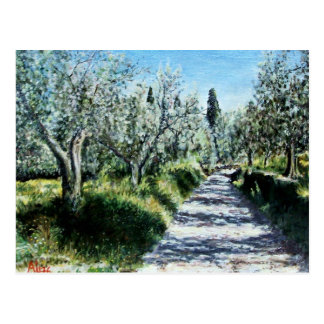 OLIVE TREES IN TUSCANY POSTCARD