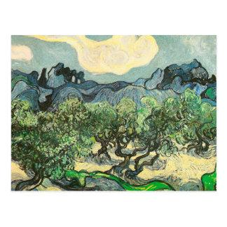 Olive Trees, Mountain Landscape Van Gogh Fine Art Postcard
