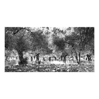 Olive trees personalized photo card