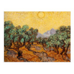 Olive Trees Post Card