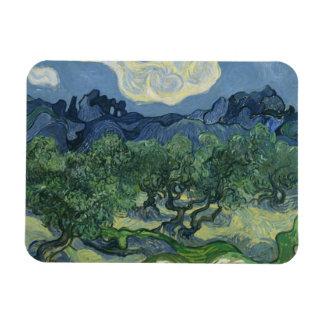 Olive Trees Premium Magnet