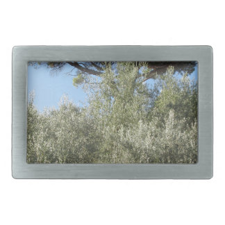 Olive trees with pine tree as background belt buckle