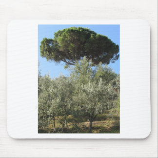 Olive trees with pine tree as background mouse pad