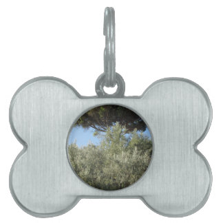 Olive trees with pine tree as background pet ID tag
