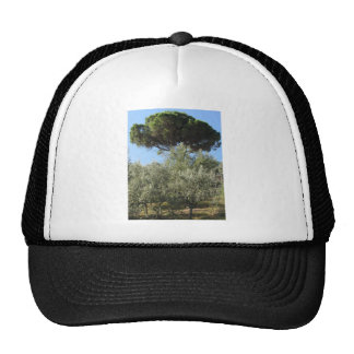 Olive trees with pine tree as background trucker hat