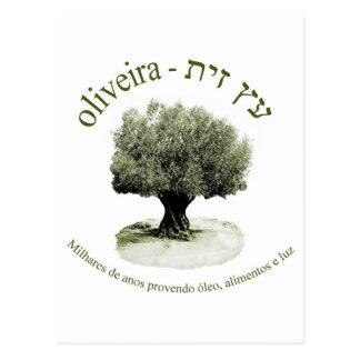 Oliveira, luz del óleo e del provendo de Milhares Postal