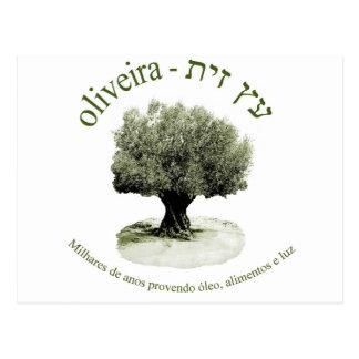 Oliveira, luz del óleo e del provendo de Milhares Tarjeta Postal