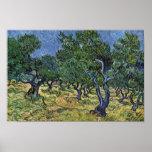 Olivenhain By Vincent Van Gogh Poster
