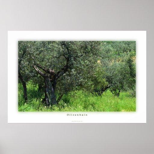 Olivenhain Poster