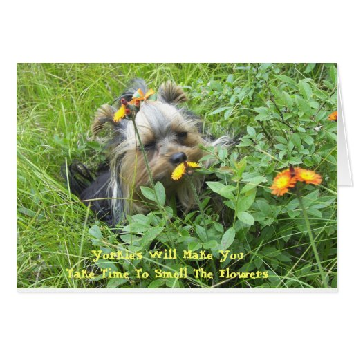 Oliver in the flowers 7-3-2007, Yorkie's Will M... Stationery Note Card