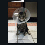 """Oliver&#39;s Get Well Card<br><div class=""""desc"""">Laughter is the Best Medicine and when you&#39;re in need of surgery - a little humor couldn&#39;t hurt ... Oliver is a rescue kitty who just keeps rolling with the punches - always keeping a good attitude ... always laughing. Oliver was rescued from the street as an adult kitty. He...</div>"""