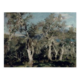 Olives, Corfu, 1912 Postcard