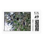 olives postage