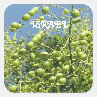 Olivo en Israel Pegatina Cuadrada
